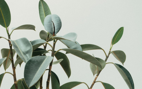 Biophilic Design: Welcoming Nature Into Interiors